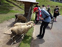 羊のえさやり体験